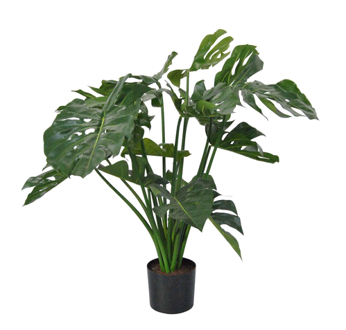 MONSTERA PIANTA NEL VASO 18F. H.80CM VERDE