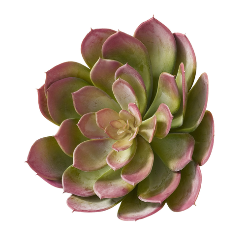ECHEVERIA PICK 18CM RO/VE