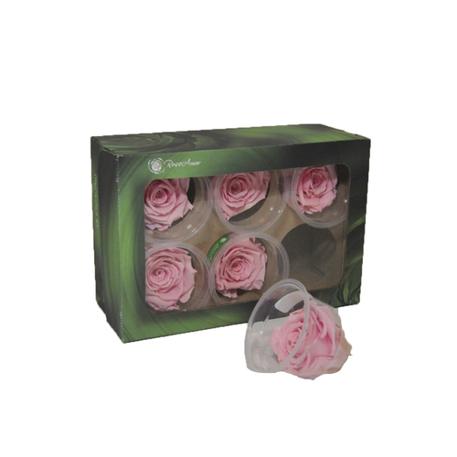 ROSE STABILIZZATE (6) ROSA BABY D5CM